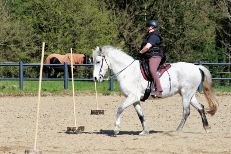 Working Equitation mit Luna